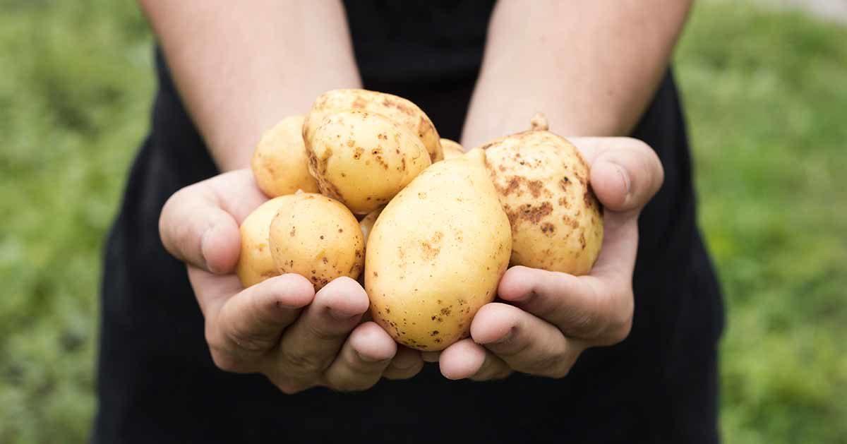 Czy ziemniaki są kaloryczne? Nadają się na dietę?