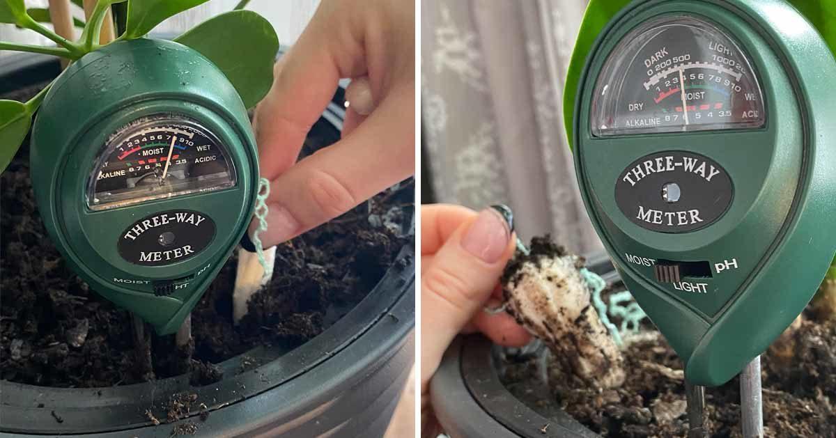 Tampony uratują przelane kwiaty – sposób na przelaną roślinę