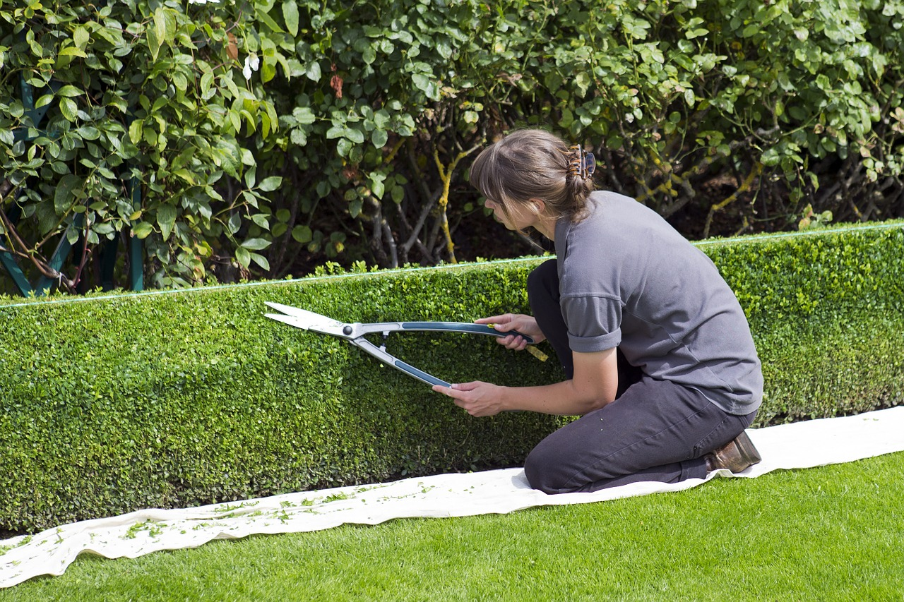 Sposoby na cięcie i pielęgnację krzewów ozdobnych w ogrodzie