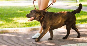 Jak często wychodzić z psem na zewnątrz?