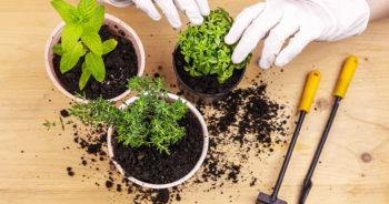 Jakie zioła warto mieć w swoim ogrodzie?