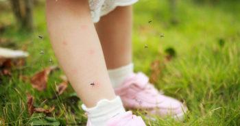 Cukier wanilinowy odstrasza komary – zobacz, jak go wykorzystać!
