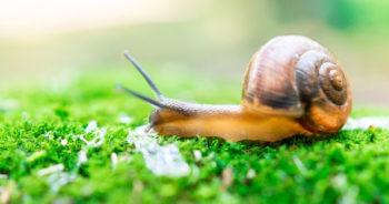 Jakie rośliny odstraszają ślimaki w ogrodzie?