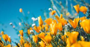 Pielęgnacja ogrodu – czyli jak dbać o przestrzeń zieloną