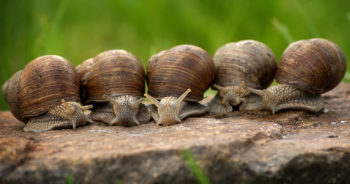 Masz dość ślimaków w ogrodzie? Zobacz, jak z nimi wygrać!