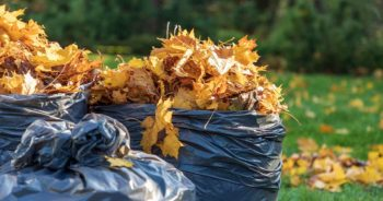 Czy można palić liście w ogrodzie i na działce? Co z nimi zrobić?