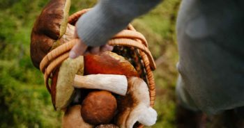 Wybierasz się na grzyby? Te mity na temat grzybów musisz znać!